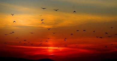 България е дом за 70% от птиците в Европа